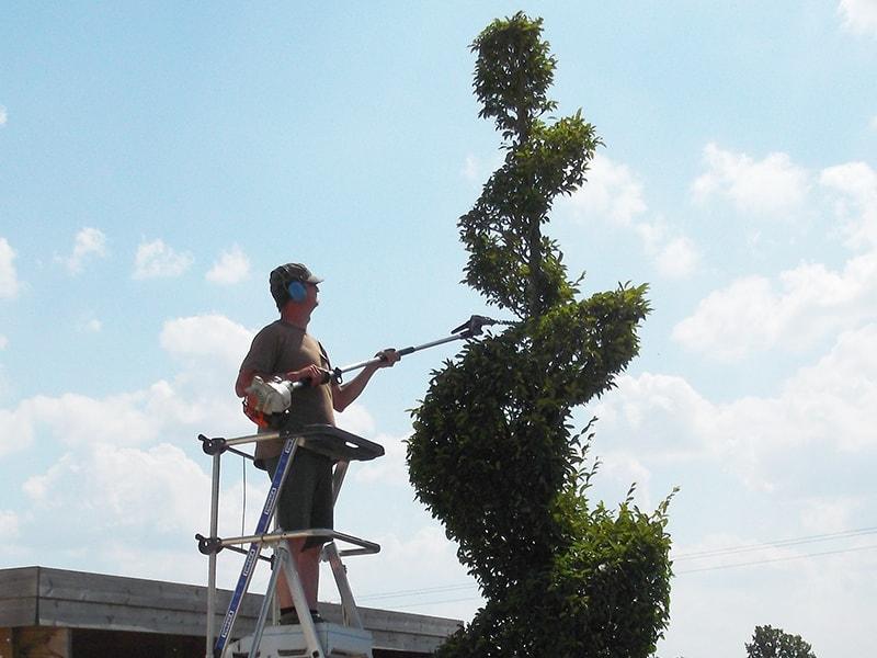 Secateur electrique allo jardin service for Jardin service