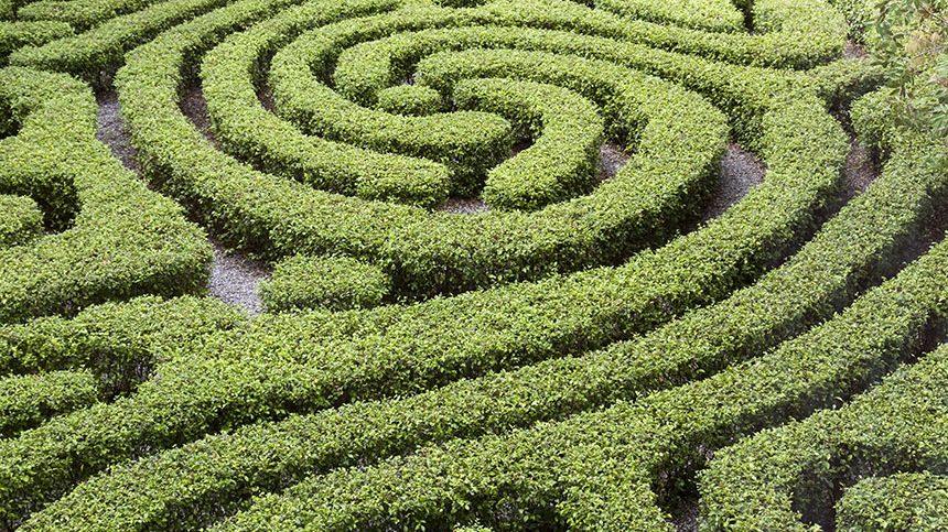 Services de taille allo jardin service for Jardin service